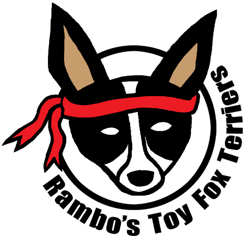 Rambo's Toy Fox Terriers
